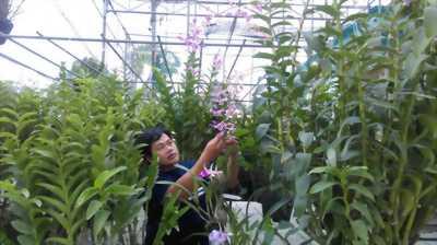 Thanh lý toàn bộ vườn lan Bình Chánh