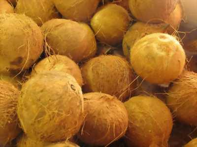 Dừa khô