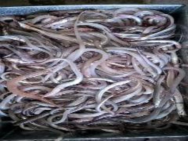 Cung cấp hải sản miền nam, tiệc cưới, hải sản đông lạnh