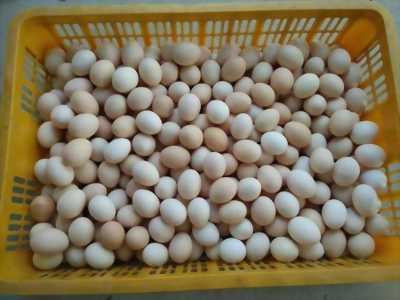 Trứng gà ác nhà nuôi