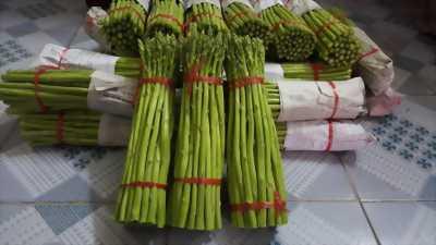 Măng tây xanh Ninh Thuận