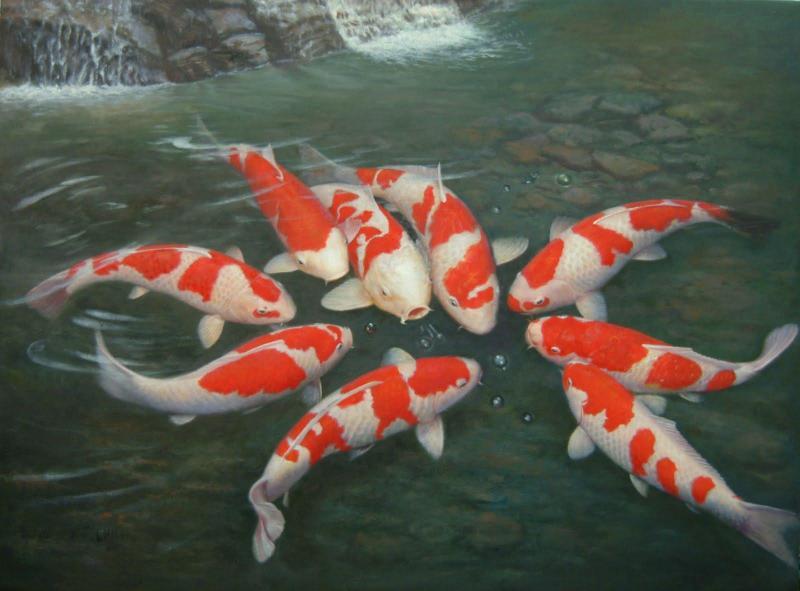 Cách nuôi cá Kiếng theo phong thủy