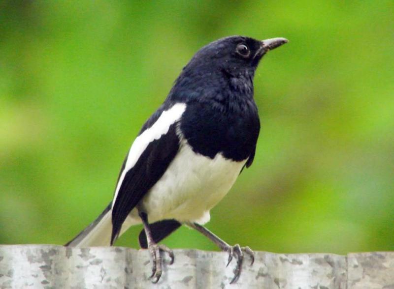Lưu ý khi mua bán chim cảnh qua mạng mà bạn không thể bỏ qua: Không nên ham rẻ