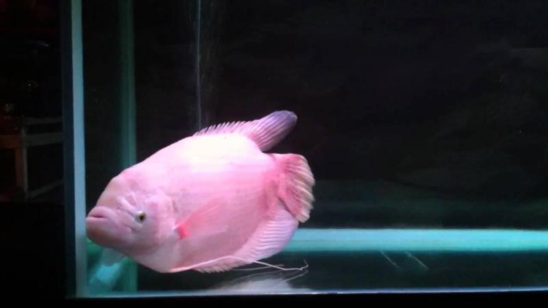 Các loại cá cảnh nhỏ đẹp dễ nuôi nhất