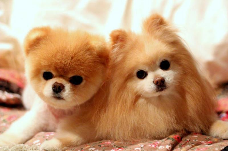 Những chú chó nổi tiếng nhất thế giới