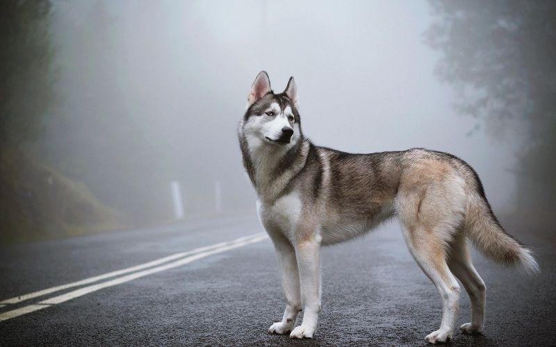 Những giống chó nuôi đẹp nhất thế giới
