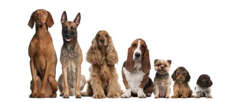 Tiết lộ những nơi buôn bán chó cảnh chất lượng