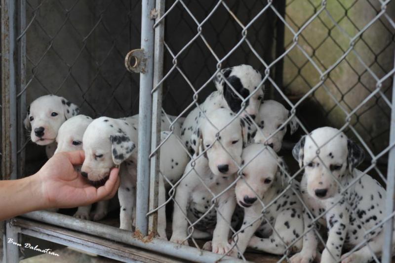 Địa chỉ bán chó cảnh ở Hà Nội được nhiều người săn đón nhất