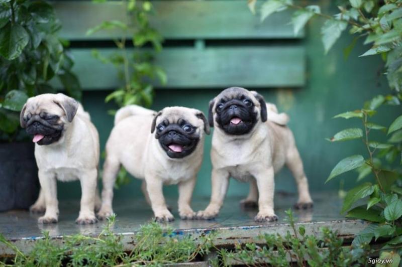 Ảnh những chú chó tinh nghịch đáng yêu nhất 2017