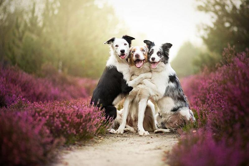 Mãn nhãn với những hình ảnh chó đẹp nhất