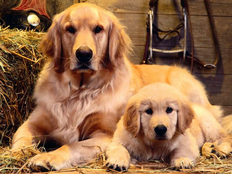 Bạn đã biết chọn những giống loại chó nào để nuôi?