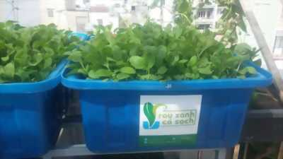 Tự Trồng Rau Tại Nhà với hệ thống trồng rau sạch Aquaponics