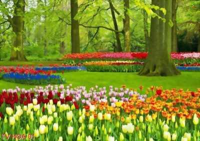 tranh vườn hoa thiên nhiên tuyệt đẹp
