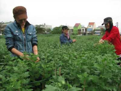 Cần Nam nữ Làm vườn bao ăn ở tại Đà Lạt